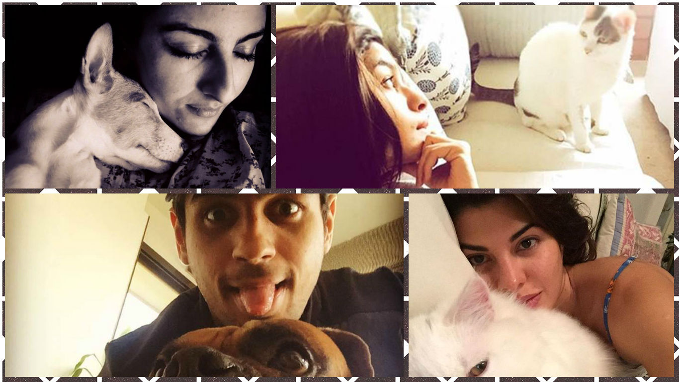 Selfies: Bollywood Celebrities With Their Cute Pets